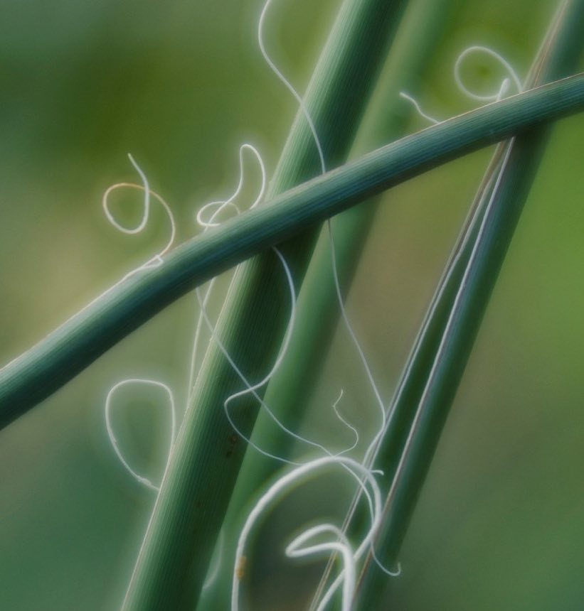 green plant stems white string macro photography abstract green lensbaby featured photos