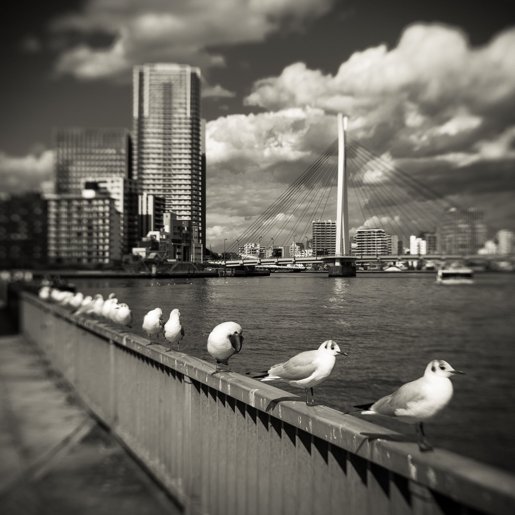 seagulls sitting on a concrete railing skyline bridge skyscrapers black and white photography Lensbaby featured photos of the week