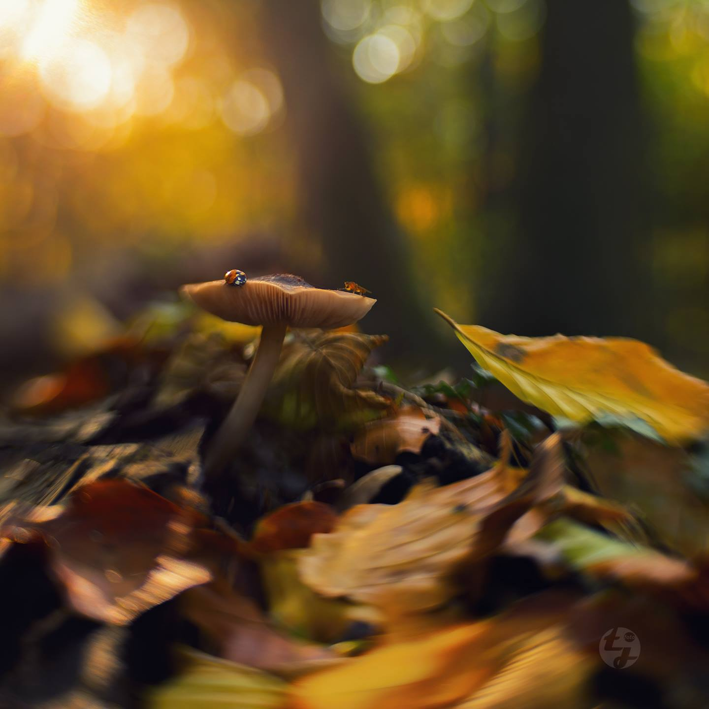 ladybug on mushroom in forest fall leaves golden light featured photos lensbaby