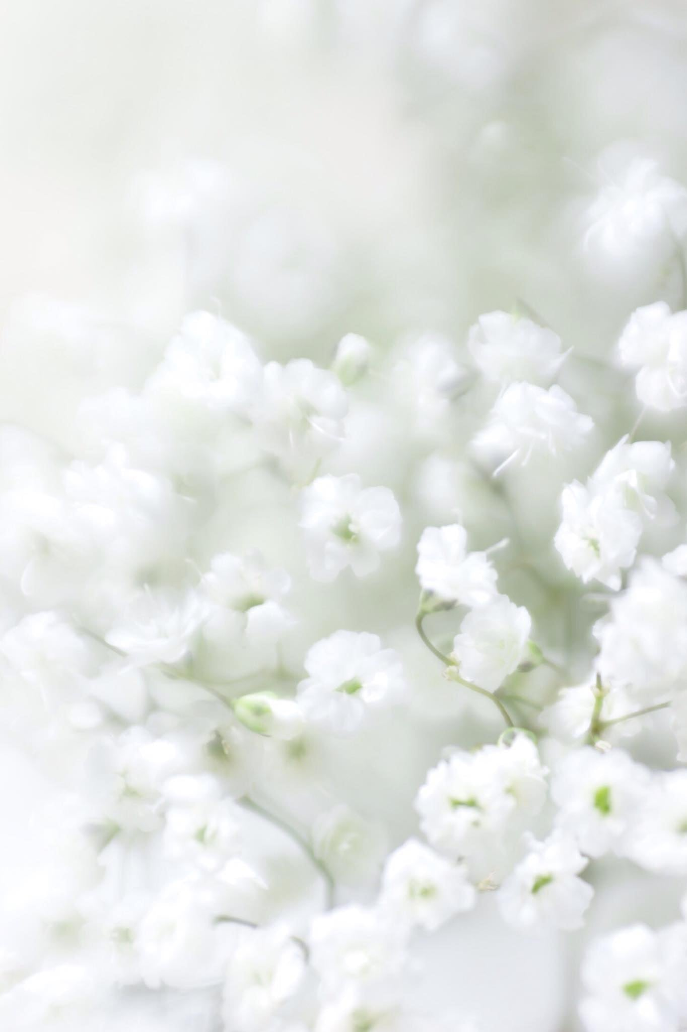 white flowers puffy flower blossoms selective focus soft pillows Lensbaby featured photos macro