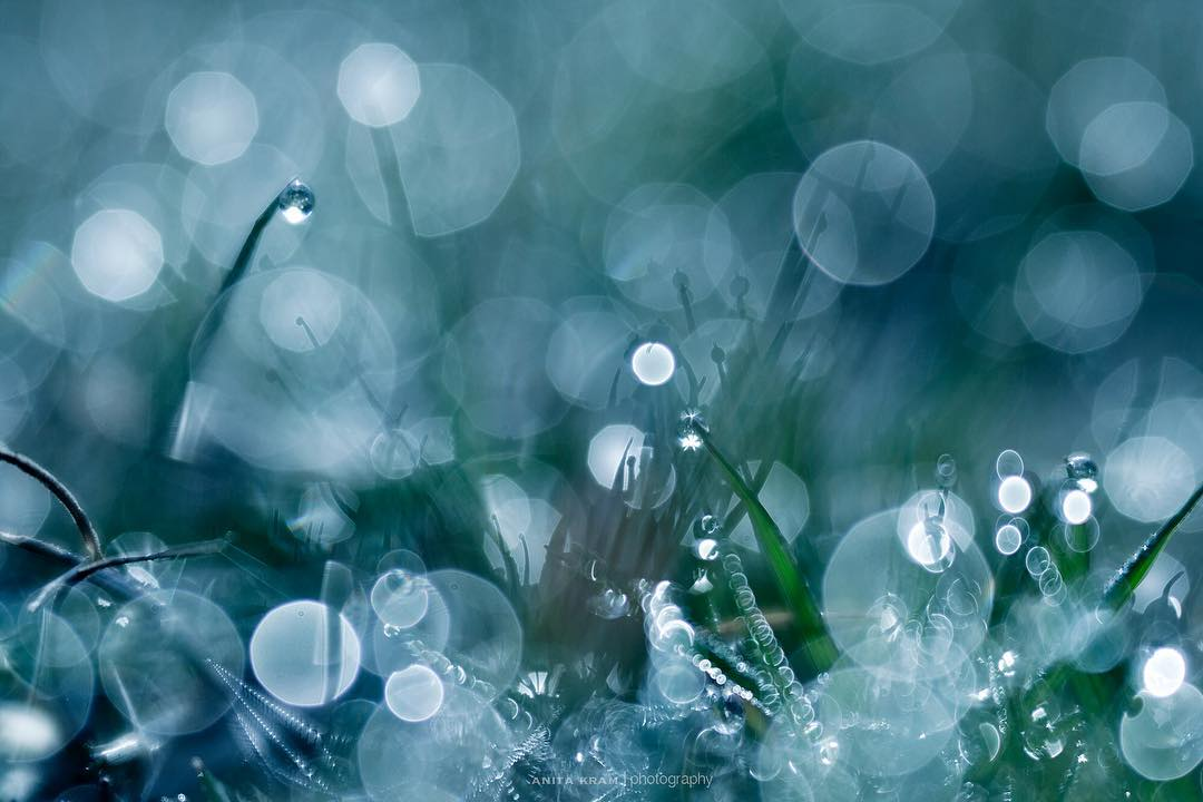 grass dew blades of grass water droplets bokeh drops circles blue and green macro photography anita kram Lensbaby featured photos
