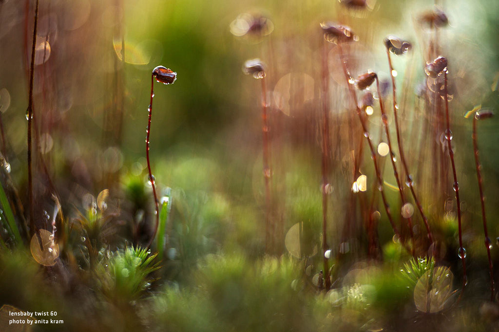garden dew drops of water flowers and grass macro photography Lensbaby's top 12 photos