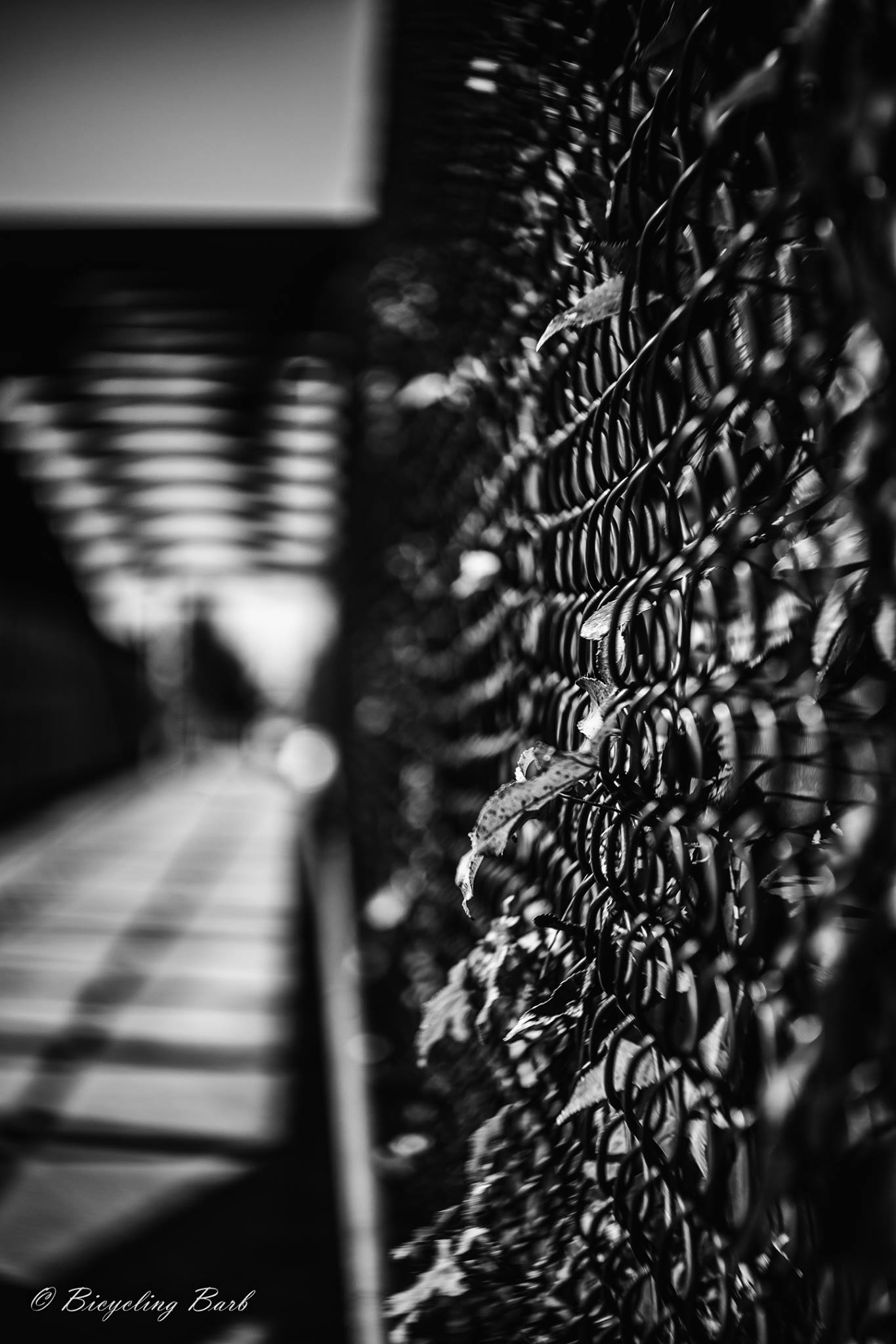 black and white chain link fence shadows leaves featured photos of the week we are the enemy of perfection