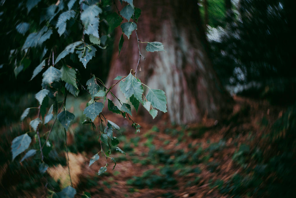 Leaves in forest