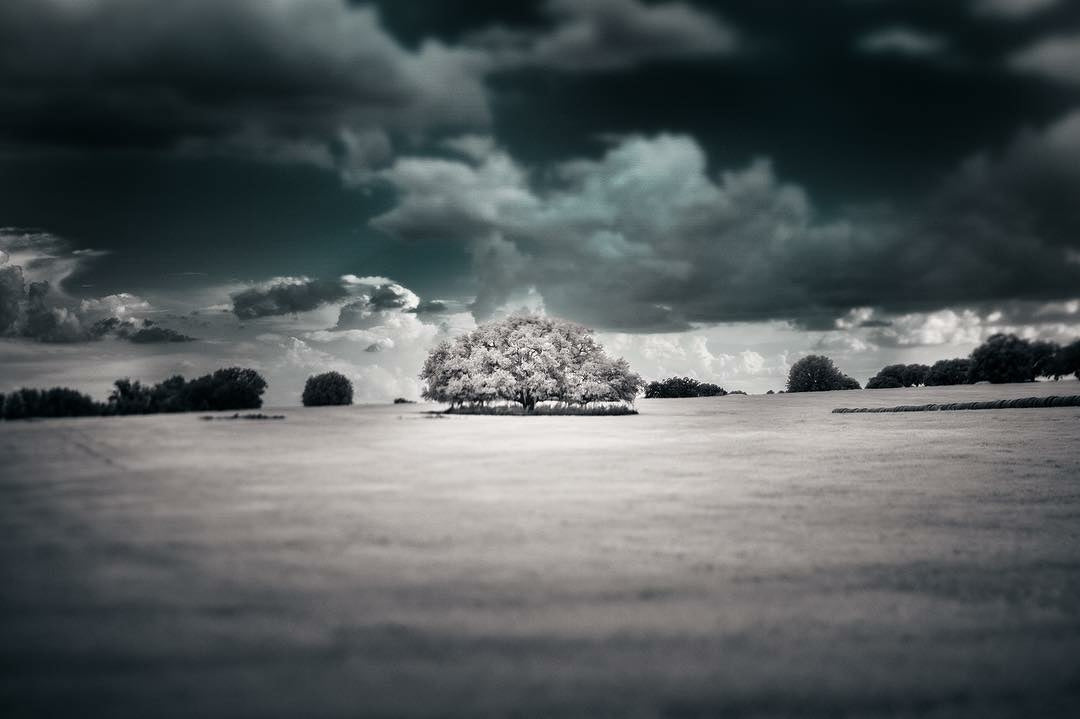 tree in the middle of an empty field with storm clouds above featured photos discovery is our joy