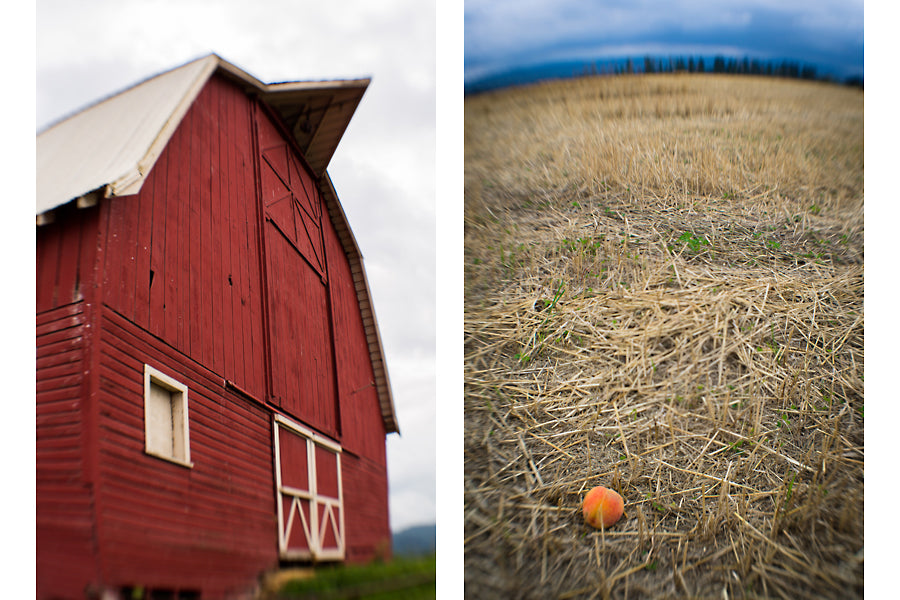An old red barn in a field on Sauvie's Island wide angle macro lens shot.