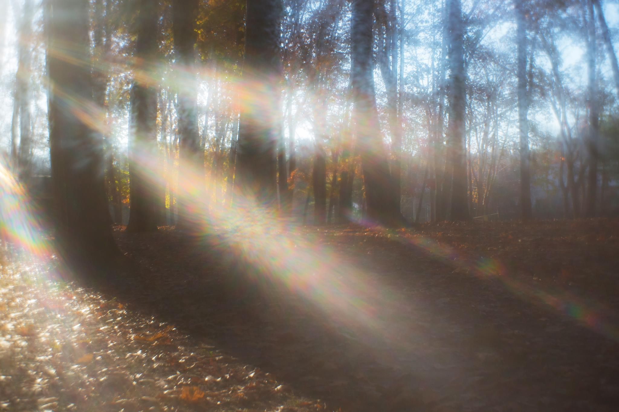 fall leaves rays of light soft autum light featured photos of the week we are the enemy of perfection
