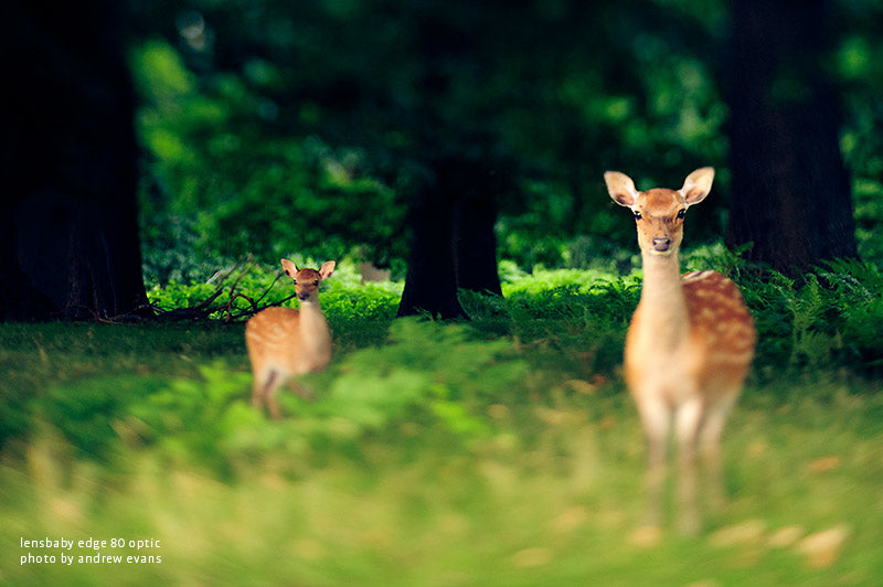 A deer and it's foe deep in the green forest from a shot by Andrew Evans using the Lensbaby Edge 80.