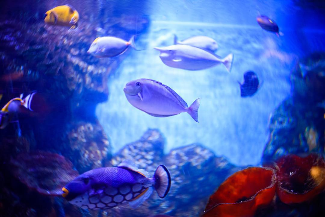 fish underwater aquarium blue water coral school of fish lensbaby featured photos