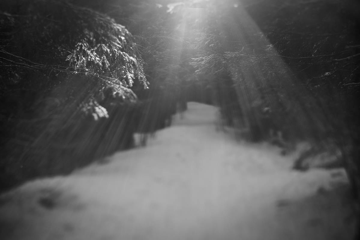 snowy trail through the forest with bright beam of light shining down black and white photography Lensbaby featured photos