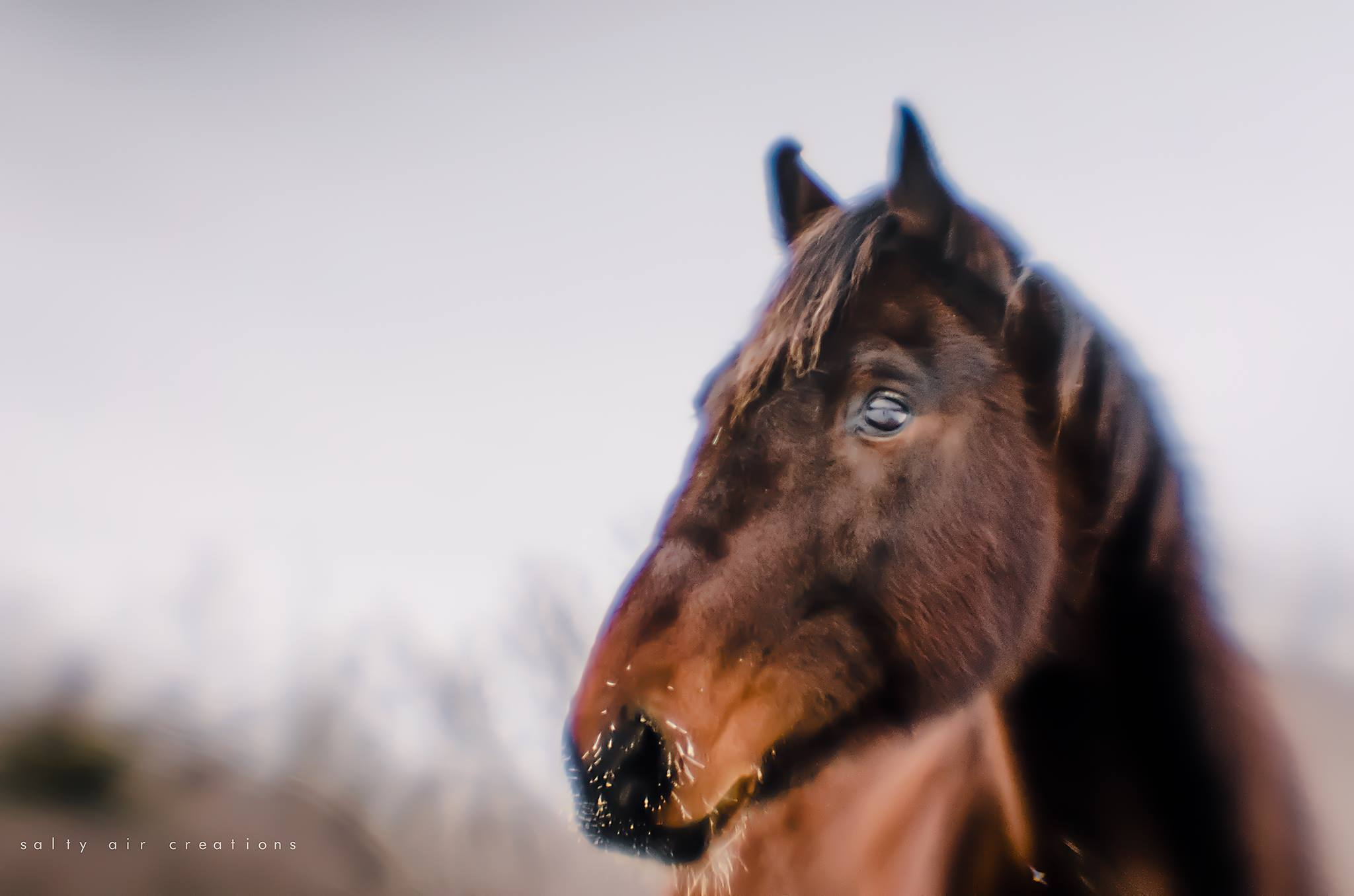 brown horse horse head and eye autumn winter lensbaby featured photos