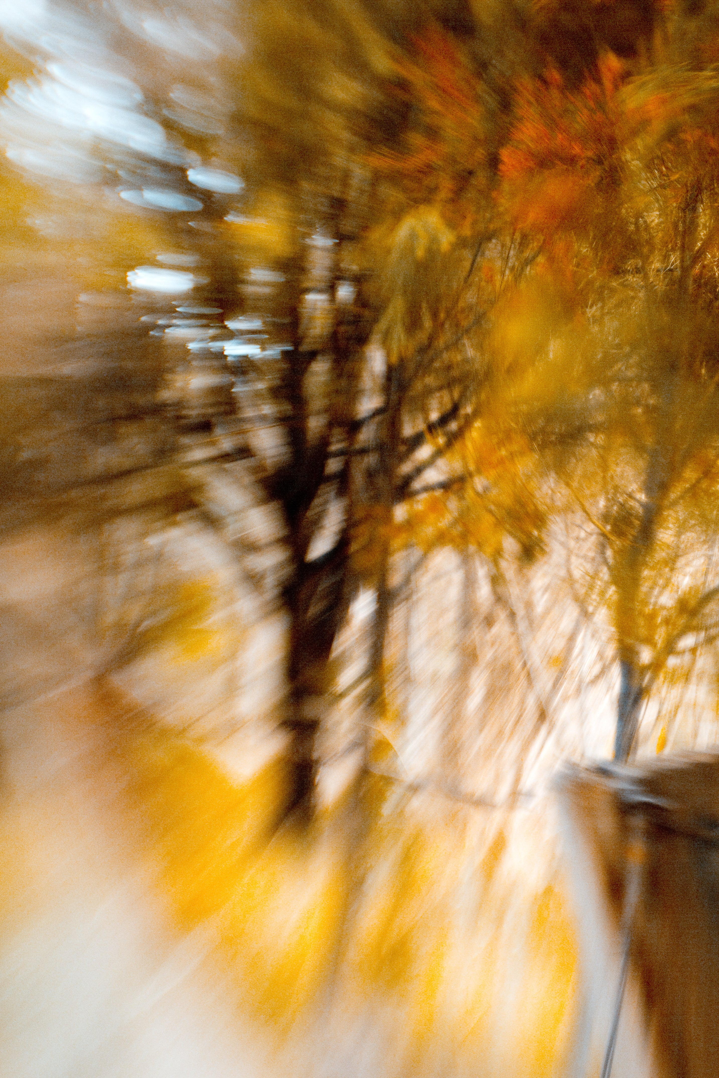 fall foliage yellow orange leaves blur lensbaby journey story marianne ellis