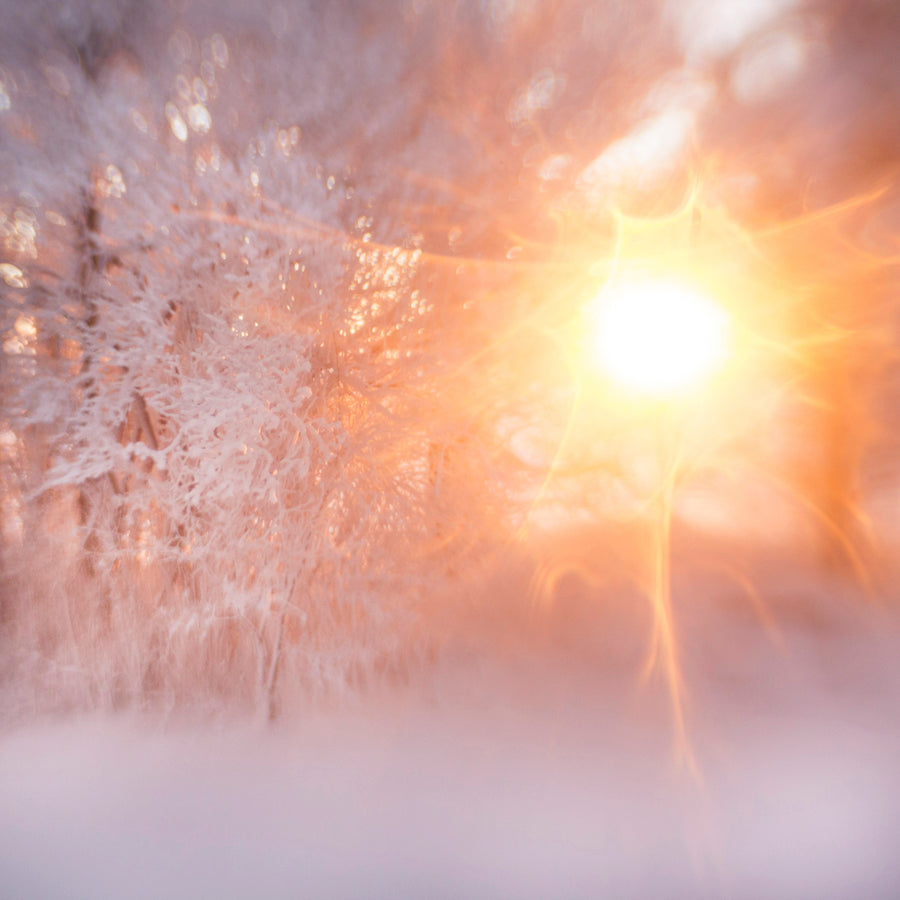 sweet45snowsunflare