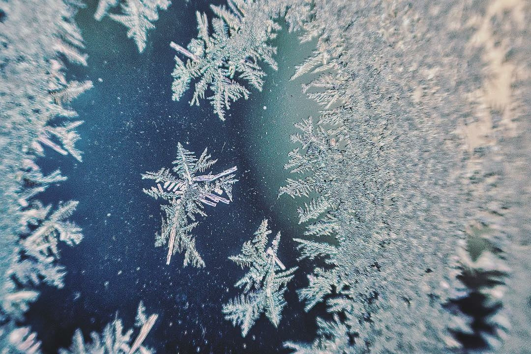 snowflakes up close detail macro winter flakes crystals Lensbaby Featured Photos