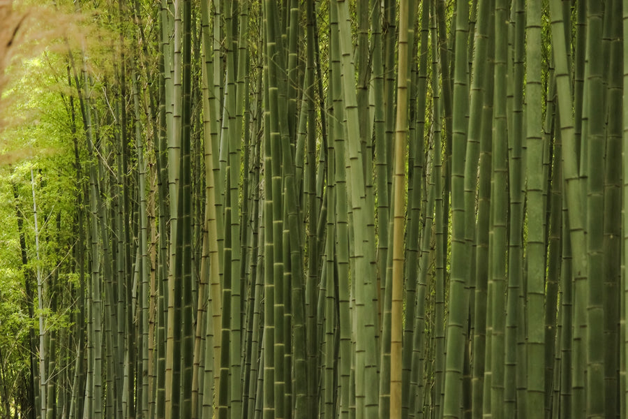 What is Bamboo Furniture?