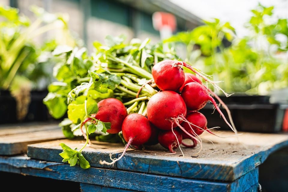 Fresh Radish (bunch)