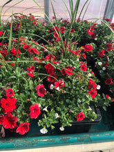"Load image into Gallery viewer, 24""  Premium Mixed Annuals Window Boxes"