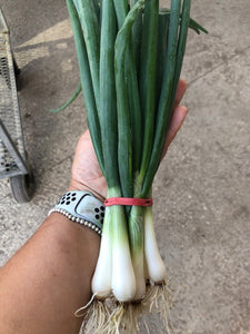 Spring Onions (Large bunch)