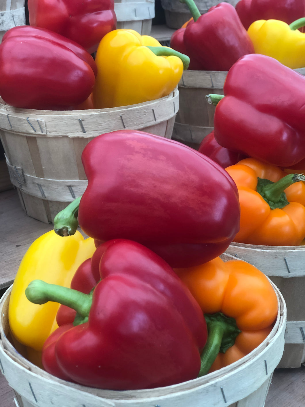 Sweet Bell Peppers - MIXED (4-6ct )