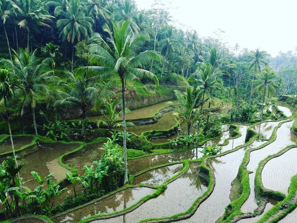 sukhavati-ayurvedic-retreat-day-excursions-ubud