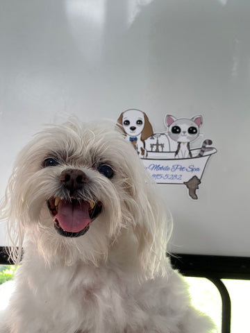 dog in front of logo for a mobile grooming business