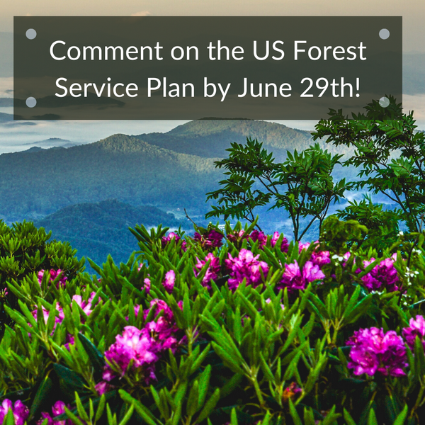 Protect our Forests by Submitting your Comment to USFS!