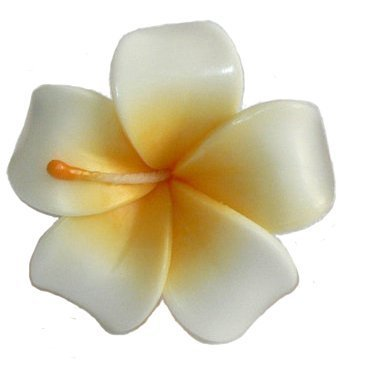 Floating Candles for Pool Asia SPA - 10 Signature Flower Frangipani Aromatherapy Relax Candle