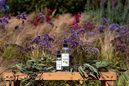 EuroSpa Aromatics Pure Eucalyptus Oil ShowerMist and Steam Room Spray, All-Natural Premium Aromatherapy Essential Oils - Pure Eucalyptus, 8oz