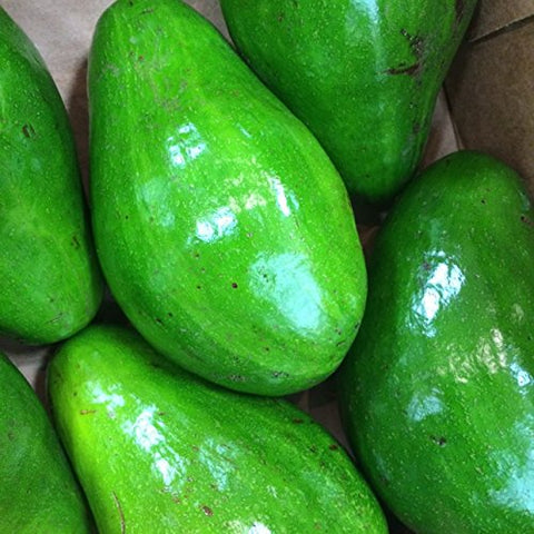 Fresh Large Florida Avocados (3 Pack)