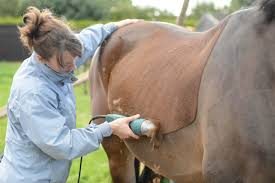 Equine Clipping