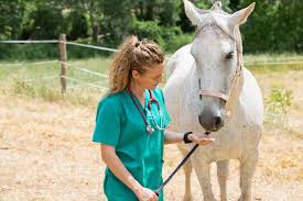 Veterinary (Equine)