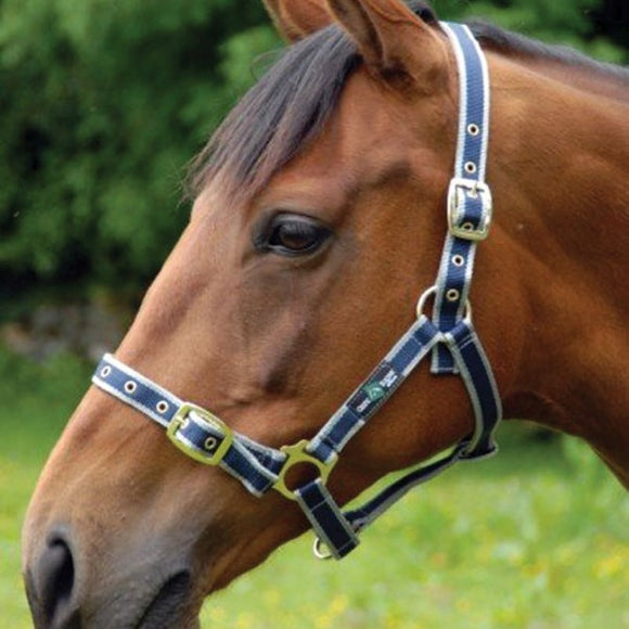Nylon Headcollar [166NH11]