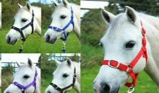 Shetland Adjustable Nylon Headcollar [037510027]