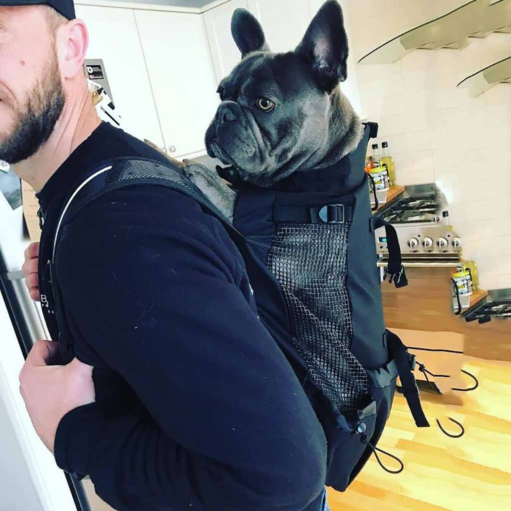 Dog Carrier Backpack, Sport Sack Dog Carrier Backpack up to 60 lbs