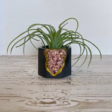 Load image into Gallery viewer, Rhodochrosite Mini Planter