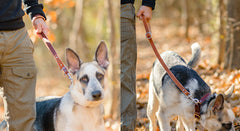The Ranger Shorty Leash | Short Leather Handle For Your Pet