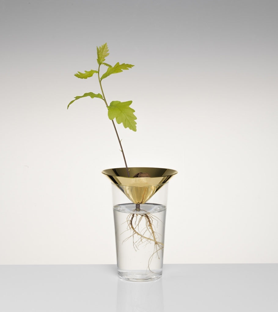 Acorn ConeFloating Forest Michael Anastassiades - Image 1