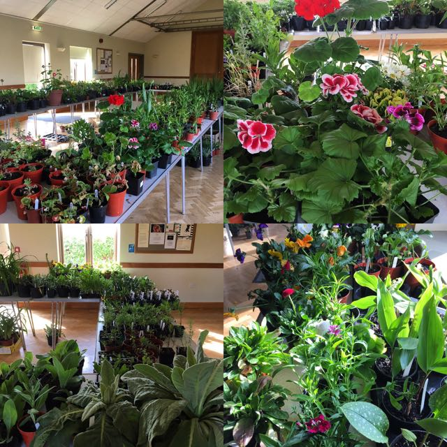 Big thank you for plant sale support