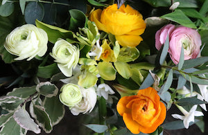 Tips for growing ranunculus