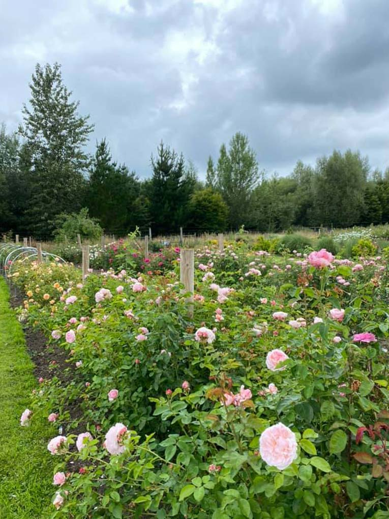 How To Design A Cut Flower Patch (online workshop)- Common ...