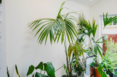 5 Statement Plants to Liven Up Your Space