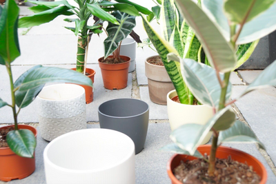 Why houseplants are good for your physical and mental health