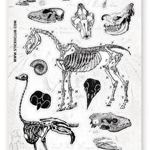 black and white fossil animal skeleton science anatomy bones sticker sheet
