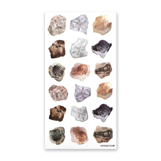 fossil pieces stones nature rocks sticker sheet