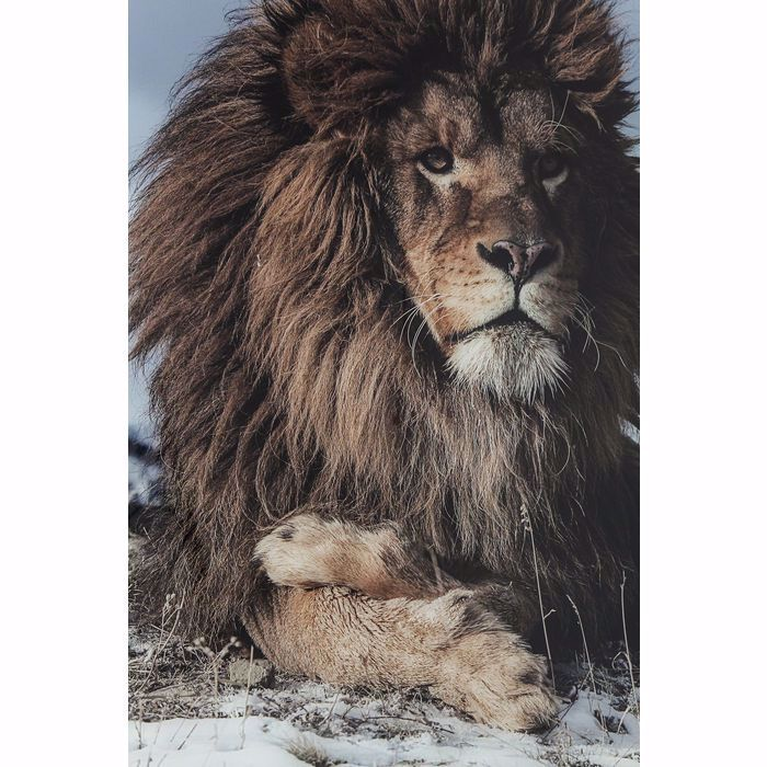 PROUD LION Glass Picture