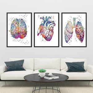 Sets of Anatomy Prints