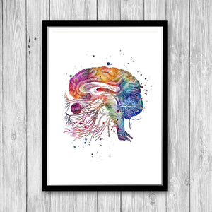 Brain Cranial Nerves Anatomy Poster - PrintsFinds