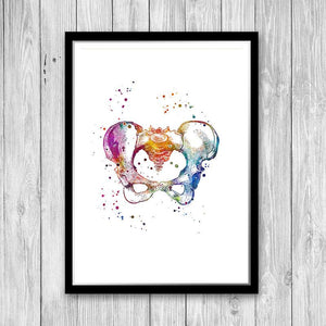 Female Pelvis Anatomy Art - PrintsFinds