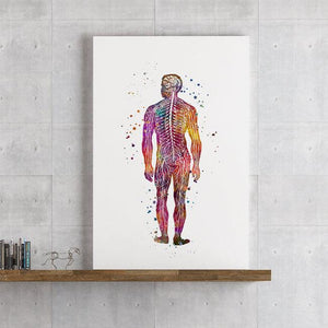 Human Body Nervous system Anatomy Art - PrintsFinds