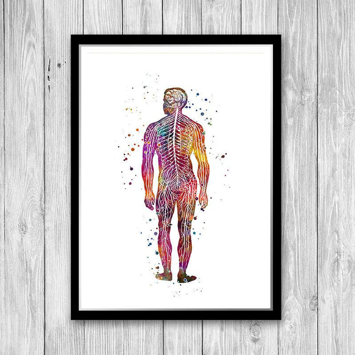 Human Body Nervous system Anatomy Art